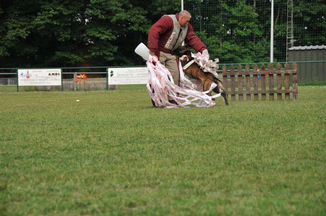 Boris Dutch Shepherd Training