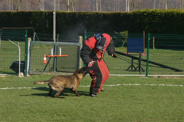 Boris Training Strong Bite