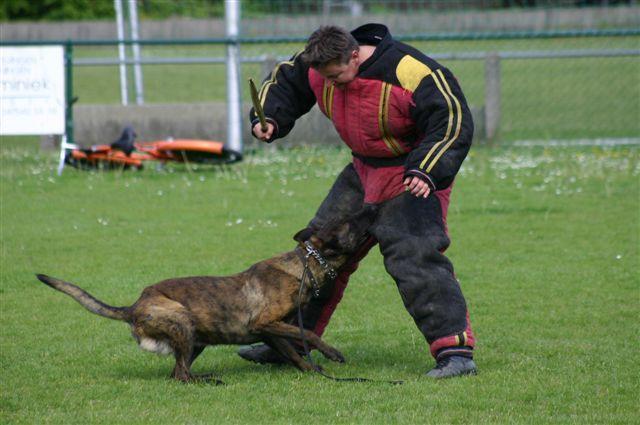 Boris Training
