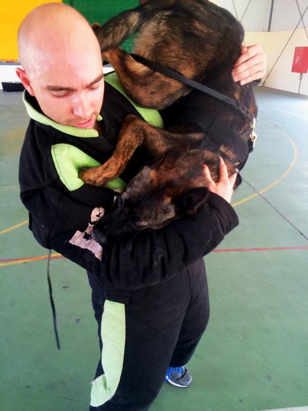 Izzy dutch shepherd and sam upside down