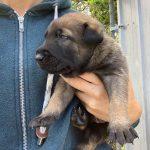 Izzy's Puppy Image 2