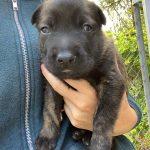 Izzy's Puppy Image 3