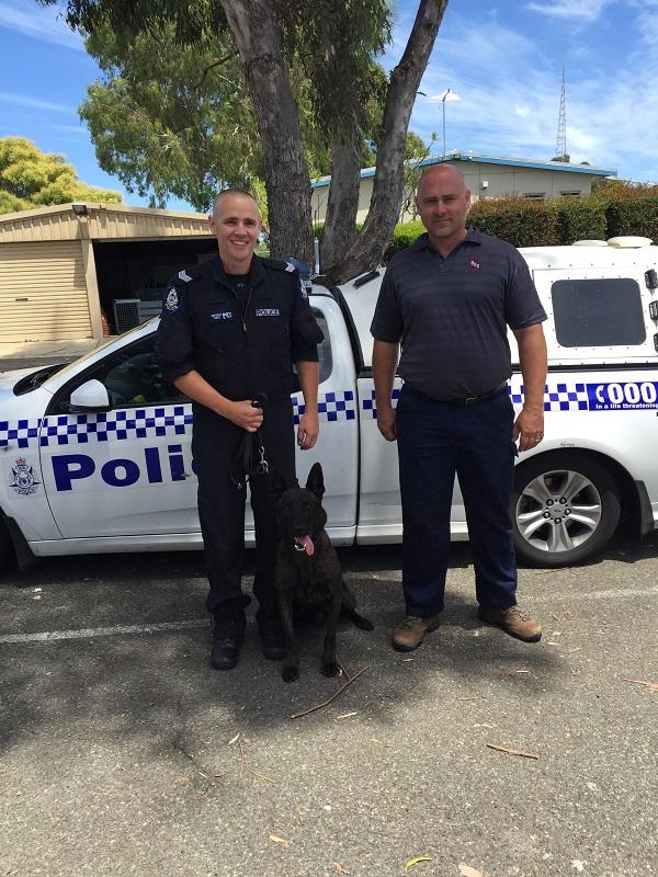 Odin Belgian Malinois Western Australia Police Force